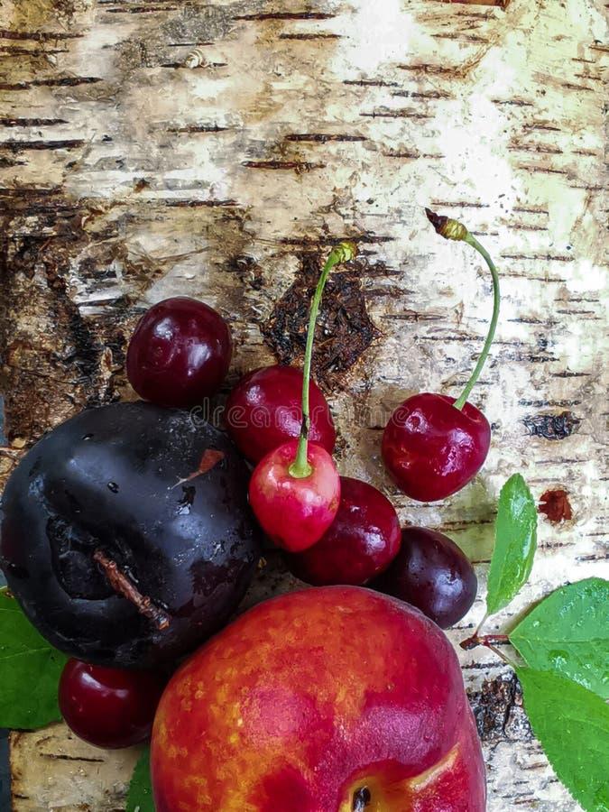 Sappige vruchten: perzik, kers en pruim op de schors van berkbomen in een de zomerdag De zomerversheid stock afbeelding