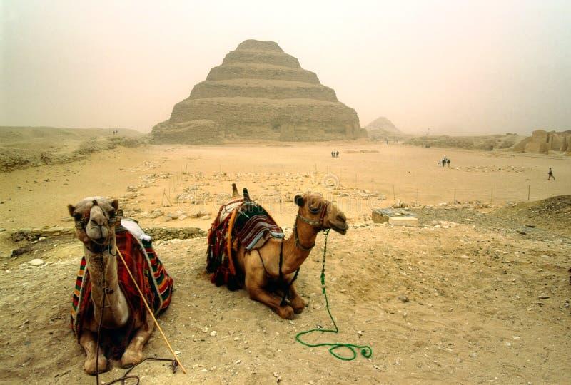 Saqqara, Egypte. photo stock
