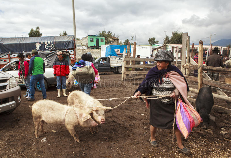 Saquisili djur marknad i Quito royaltyfria bilder