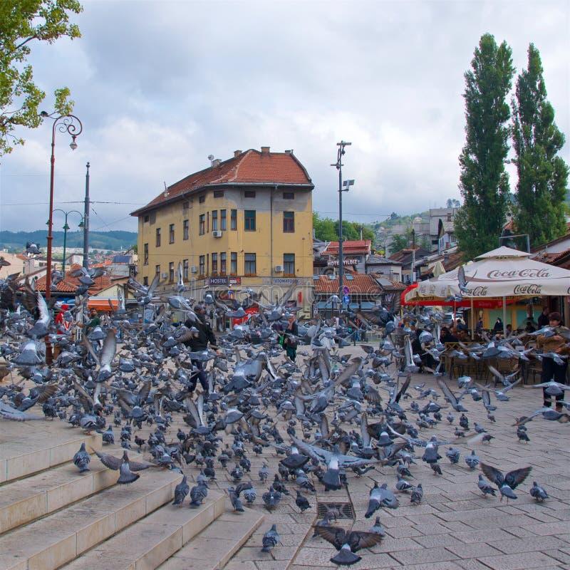 Sarajevo, Bósnia & Herzegovina - em outubro de 2017: Centenas de pombos que recolhem na praça da cidade velha em Sarajevo, em Bós imagens de stock