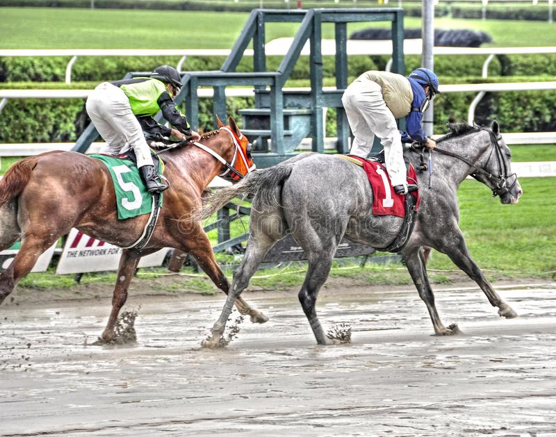 Saratoga Racing Photos. Two horses gallop out after the finish line at beautiful and historic Saratoga. Great horse racing photos taken on on a muddy track stock images