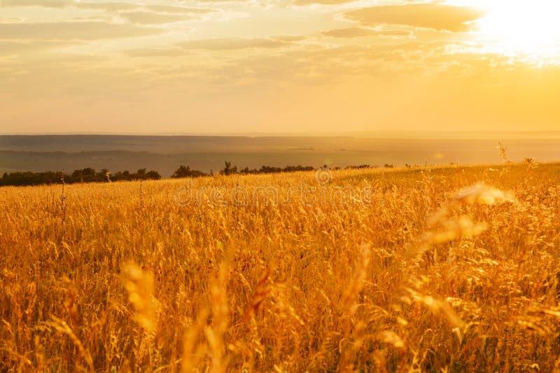 Saratov region, lopp, landskap och natur av Ryssland Gul guld- orange dramatisk härlig gryning på gryning eller skymning över änd royaltyfri fotografi