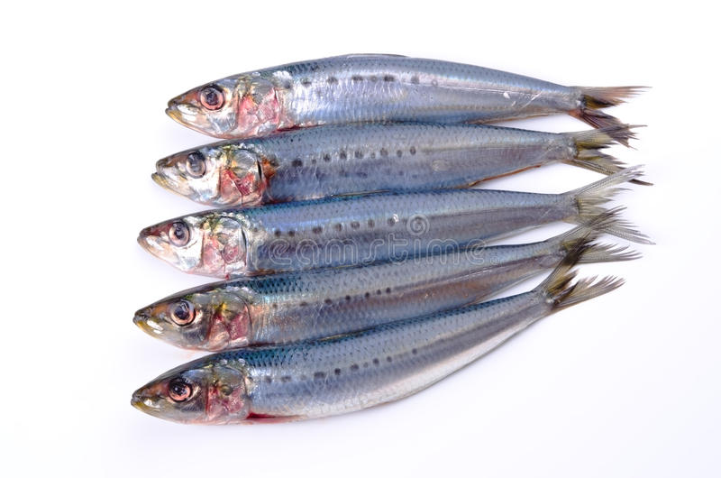 Sardine. Cooking ingredient series sardine. available for clipping work royalty free stock image