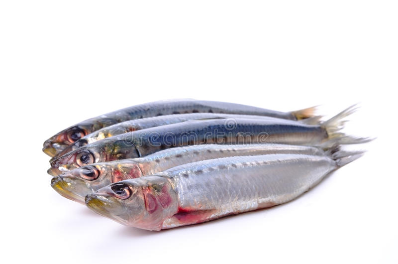 Sardine. Cooking ingredient series sardine. available for clipping work stock photography