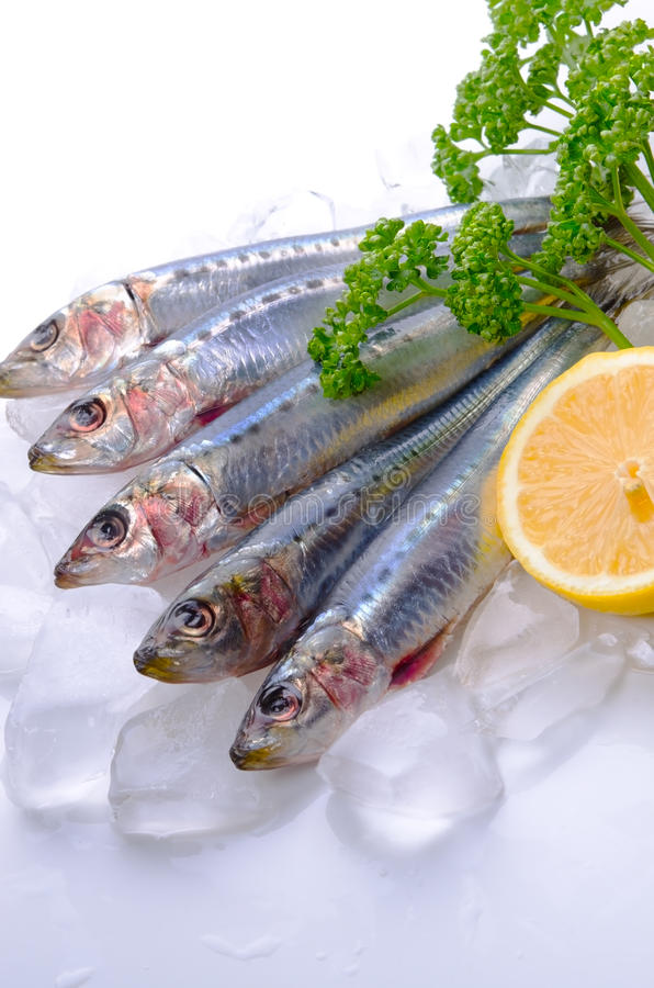 Sardine. Cooking ingredient series sardine. for adv etc. of restaurant,grocery,and others stock photos