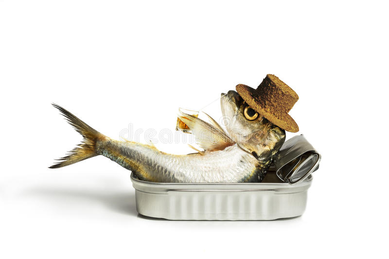 Sardine chilling out royalty free stock image