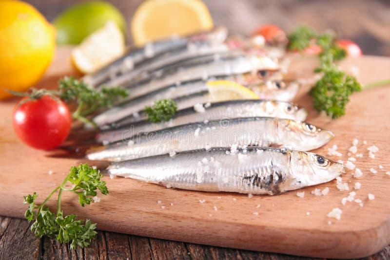 Sardine. Close up on fresh sardine stock photos