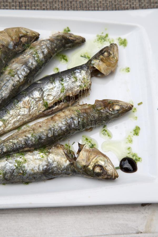 Sardine Fish, Majorca. Sardine Fish in Majorca Spain stock photography