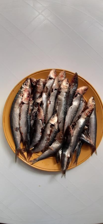 Sardine. Healthy, cooking, meal, preparing stock photography