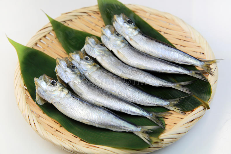 Sardine. I served sardine produced in Japan to a colander stock photos