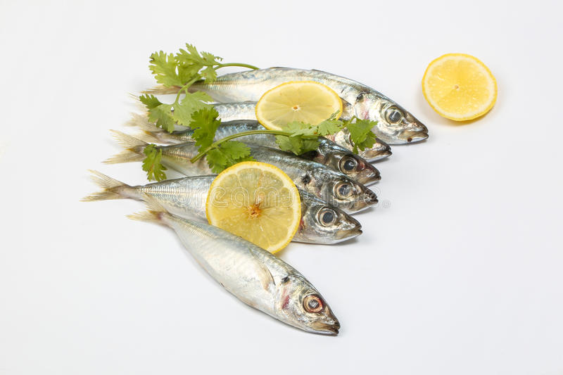 Sardine pilchard herring Fish. Raw fresh on white background stock image