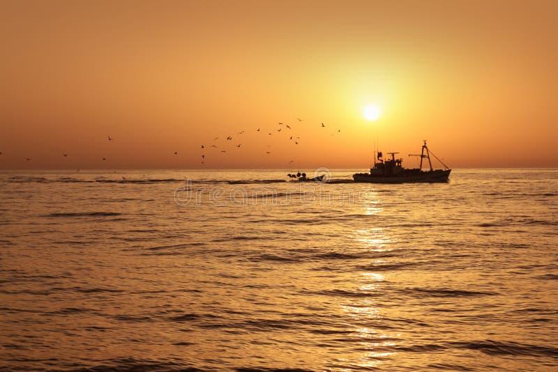 Sardine professionnelle de bâteau de pêche dans le lever de soleil photographie stock libre de droits