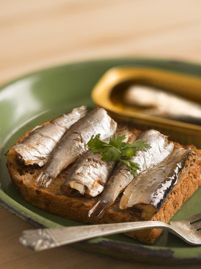 Sardine sandwich. Close up of a plate of sardine sandwich royalty free stock photos