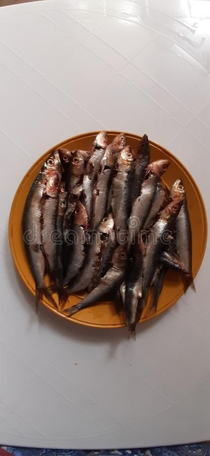 Sardine. Meal, dishes, healthy, cooking stock images