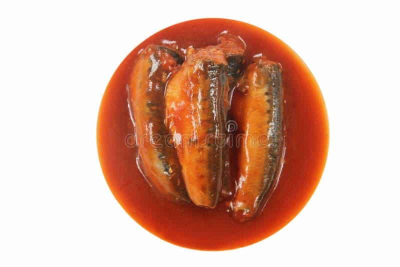 Sardinen in der Tomatensauce stockfotos