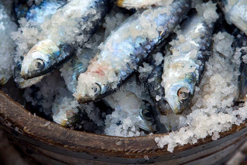 Sardinen konserviert im Salz lizenzfreie stockfotos