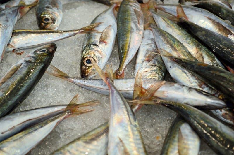 Sardines à vendre à la poissonnerie de Cadix photographie stock libre de droits