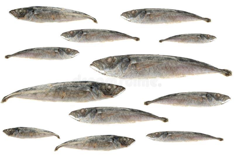 Sardines royalty free stock photo