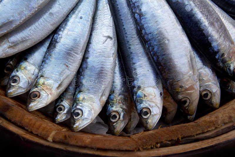 Sardines. Fresh salt water Sardines stacked on top of each other royalty free stock images