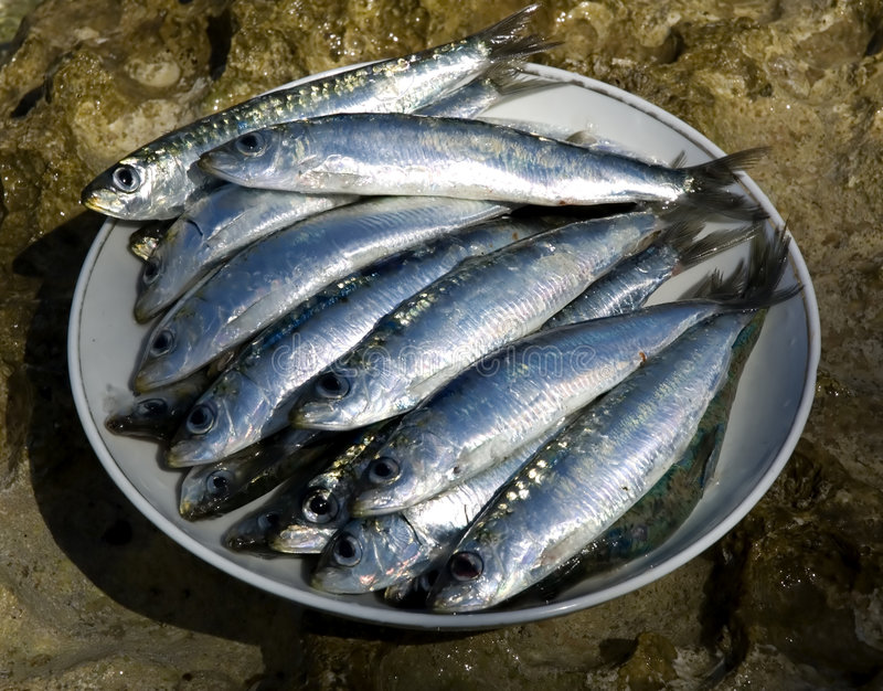 Sardines. Fresh sardines on a plate close up shoot royalty free stock photography