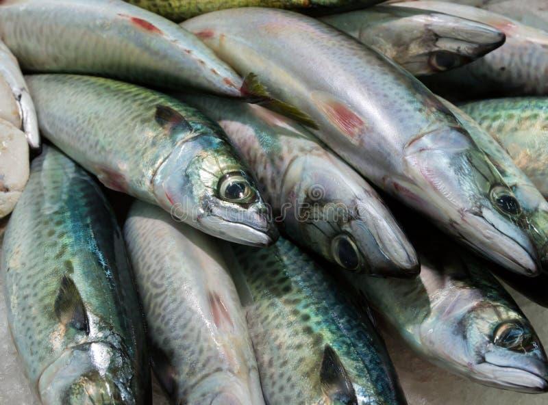 Sardines. Mackerel,sardines - sea food on ice background stock photography