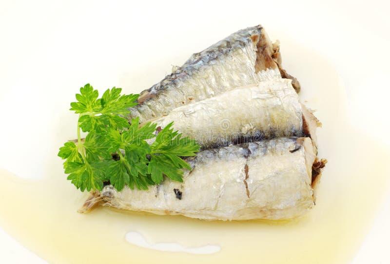 sardines arkivfoto