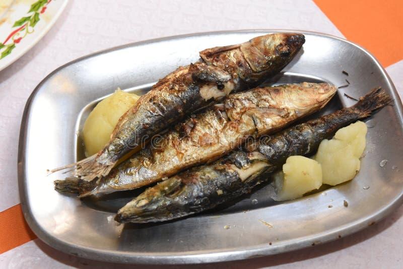 sardines photographie stock libre de droits