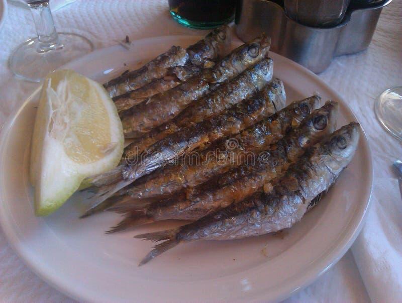 sardines photos libres de droits