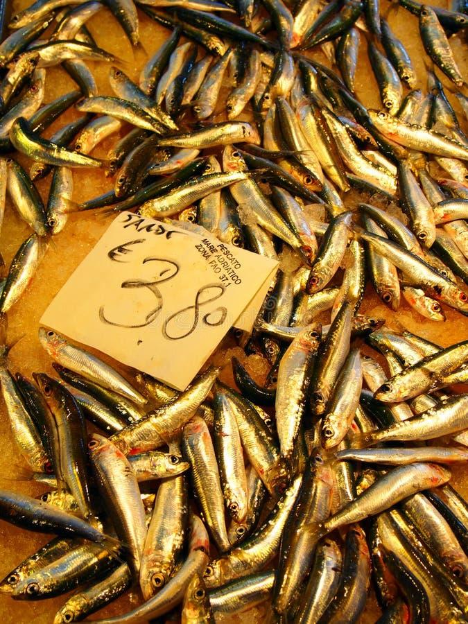 Sardines - anchois en vente photographie stock libre de droits