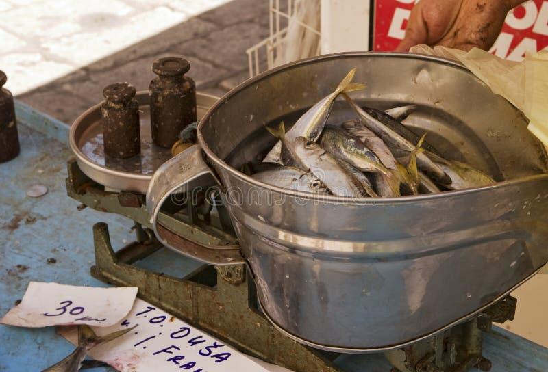 Sardines au marché de poissons image libre de droits