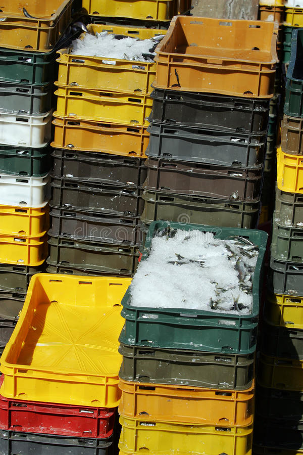 Sardines in boxes. Frozen sardines in to plastic boxes royalty free stock photos
