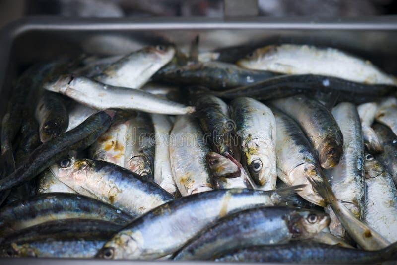Sardines crues à l'intérieur d'une cuvette photos stock