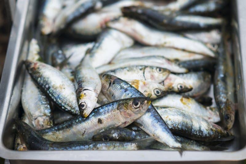 Sardines crues à l'intérieur d'une cuvette image stock