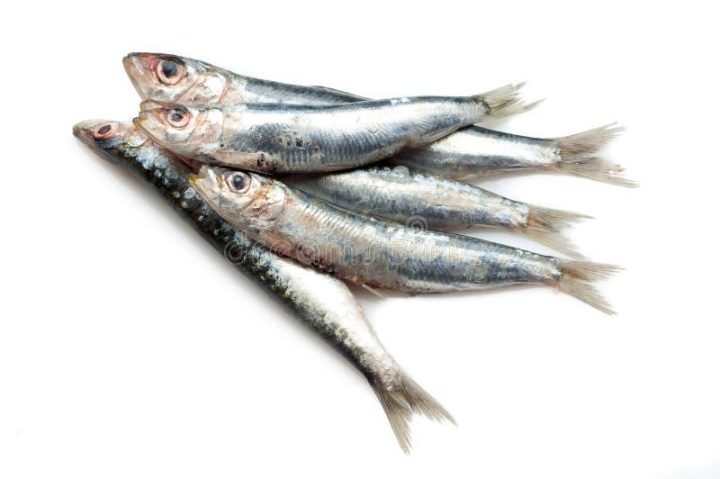 Sardines crues photos libres de droits