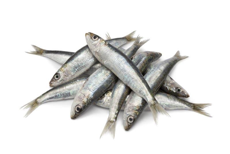 Sardines crues fraîches images libres de droits