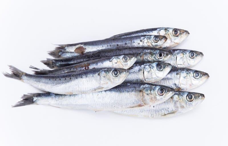 Sardines crues fraîches photo stock