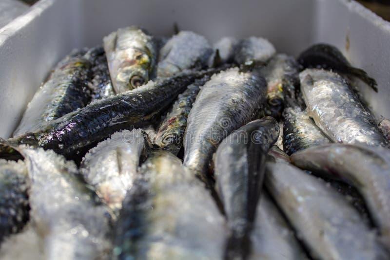 Sardines crues fraîches avec du sel, prêt à cuisiner images libres de droits