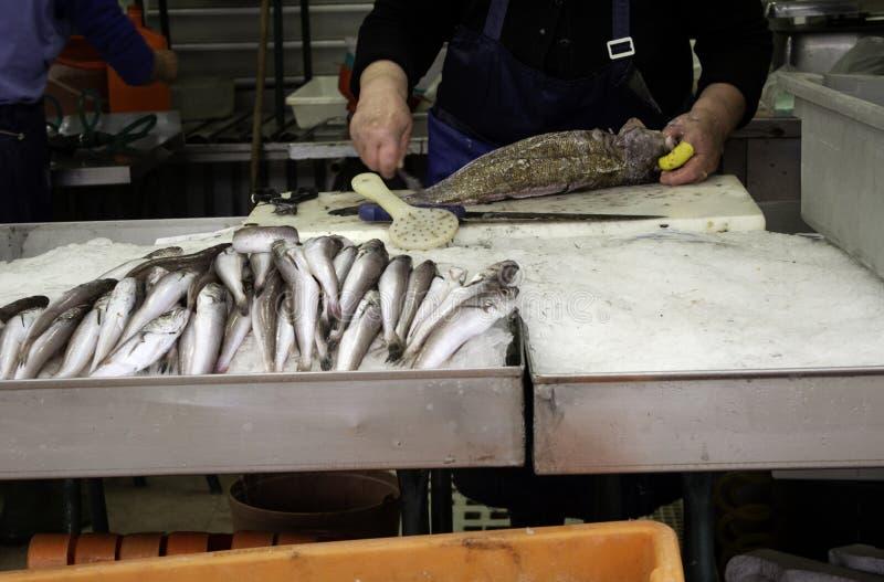 Sardines dans le magasin de poissons photos libres de droits
