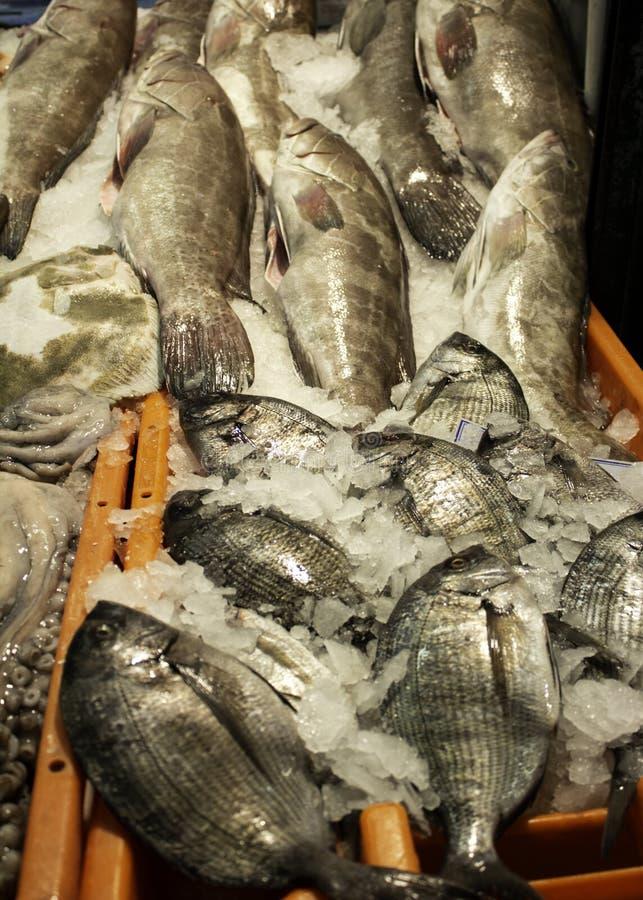 Sardines dans le magasin de poissons photos stock