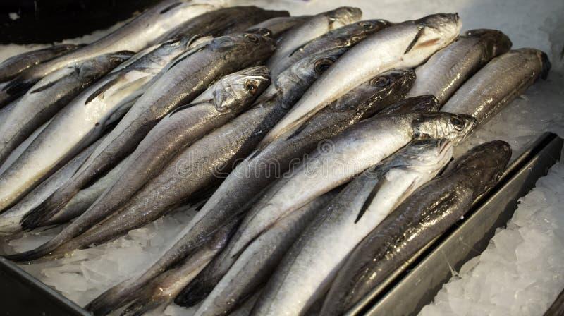 Sardines dans le magasin de poissons image libre de droits