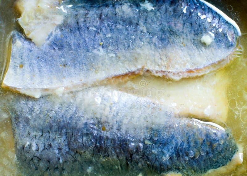 Sardines en pétrole photo stock