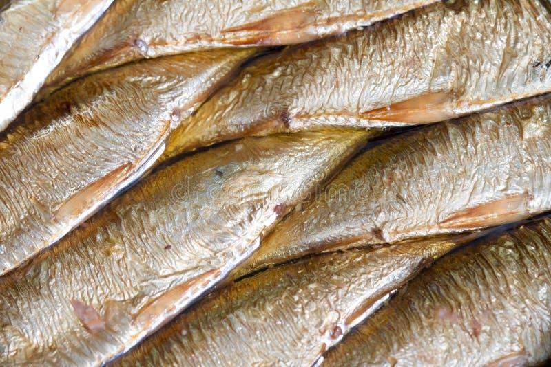 Sardines fish in can in oil closeup. Macro royalty free stock photos