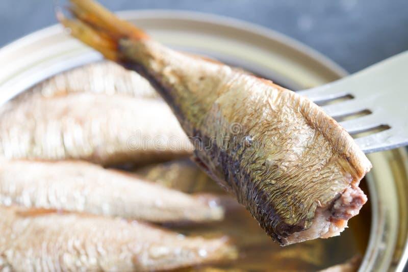 Sardines fish in can in oil closeup. Macro stock photos