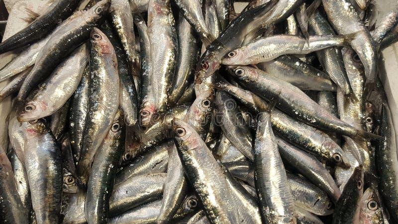 Sardines fraîches à vendre image stock