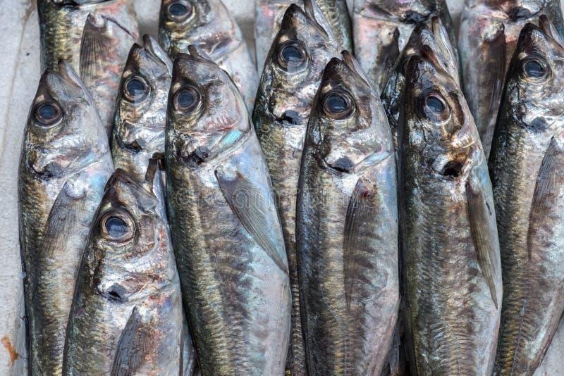 Sardines fraîches à vendre au marché de Porto (Mercado font Bolhao photos stock