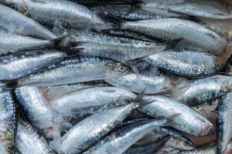 Sardines fraîches à vendre au marché de Porto (Mercado font Bolhao images libres de droits