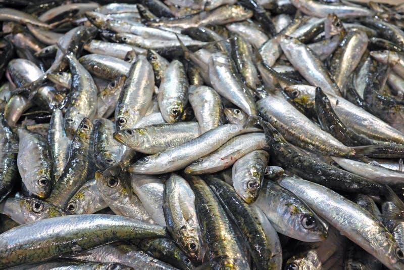 Sardines fraîches image stock