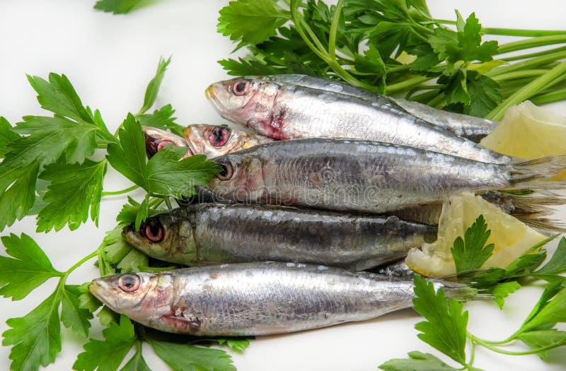 Sardines fraîches images stock