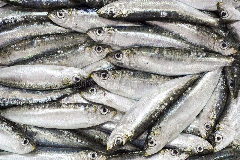 Sardines fraîches photographie stock