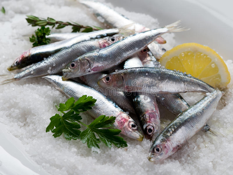 Sardines fraîches au-dessus de sel photographie stock libre de droits